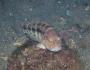 banksea-bass-fishing-1