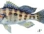banksea-bass-fishing-2