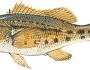 banksea-bass-fishing-3