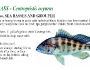 banksea-bass-fishing-5