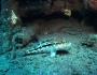 banksea-bass-fishing-6