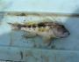 banksea-bass-fishing-7