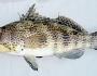 bay-bass-fishing-1