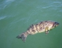 bay-bass-fishing-2