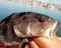 bay-bass-fishing-6