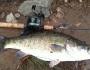 shoal-bass-fishing-3