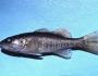 shoal-bass-fishing-8
