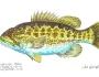 suwannee-bass-fishing-2