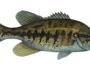 suwannee-bass-fishing-3